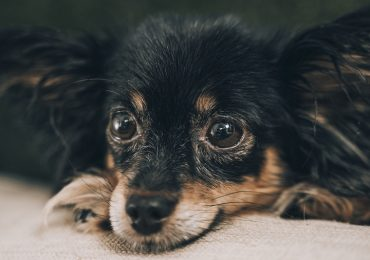 Dog Separation Anxiety- Causes, Prevention, Symptoms, Treatment.
