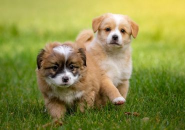How Big Can A Dog Get? — Predicting Puppy Growth