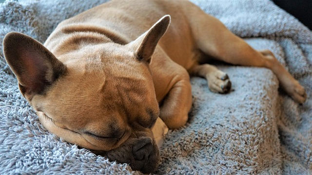 how long after heartworm treatment can dog be active