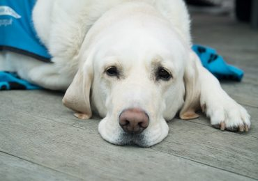 How Long After Heartworm Treatment Can Dog Be Active?