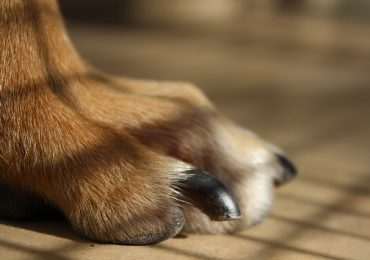 How Often To Cut Dog Nails