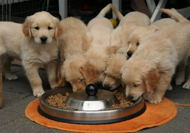 How Long Do You Feed A Dog Puppy Food?