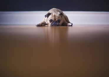 Dog Leaking Urine When Lying Down – What To Do?