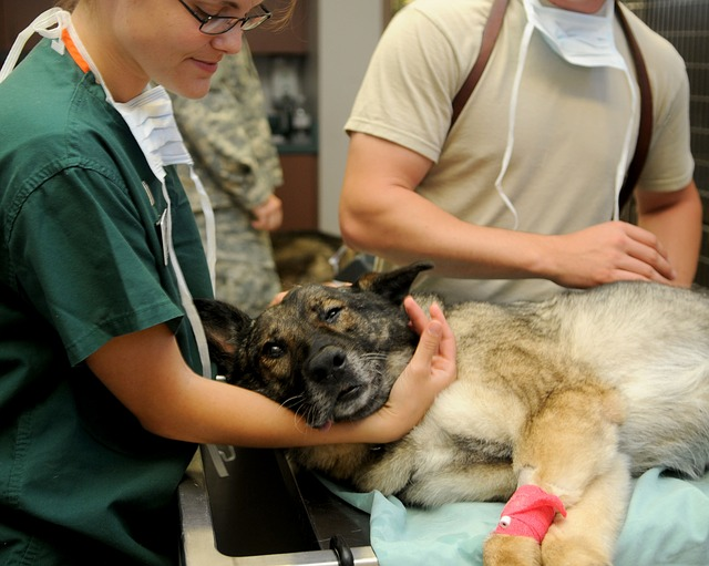 what to expect when treating dogs with cancer with prednisone