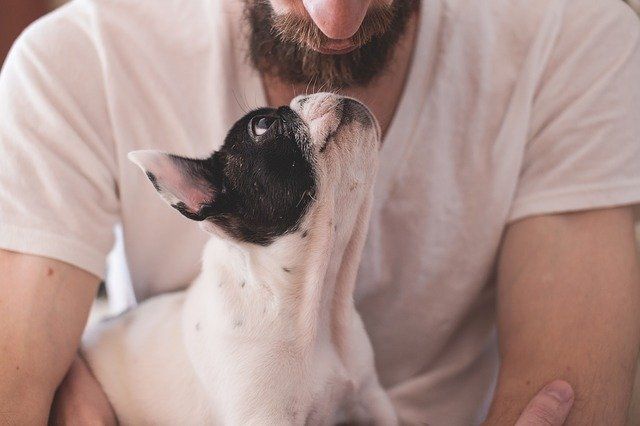 how to neuter a dog at home