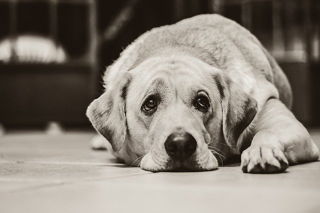 Can Your Dog Get Sick From Eating Raw Chicken?