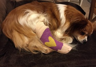 How Much Is ACL Surgery For A Dog?