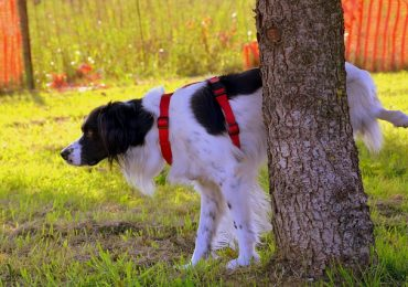 How Much Apple Cider Vinegar To Give A Dog For UTI
