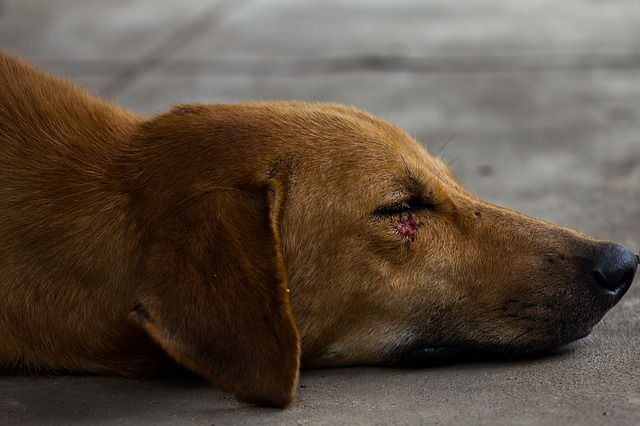 how to clean a wound on a dog