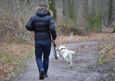 How Many Times A Day Should I Walk My Dog?