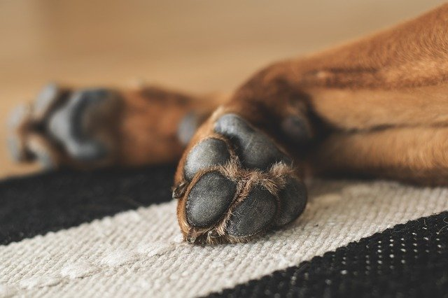 What Are The Dangers Of Using An Elastic Band To Neuter Your Dog At Home?
