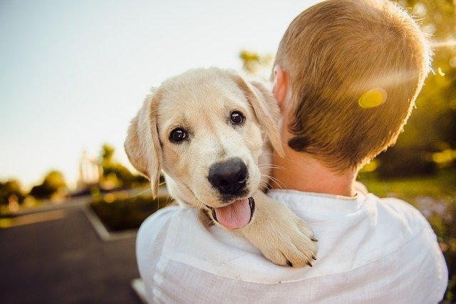 how do you know if your dog loves you