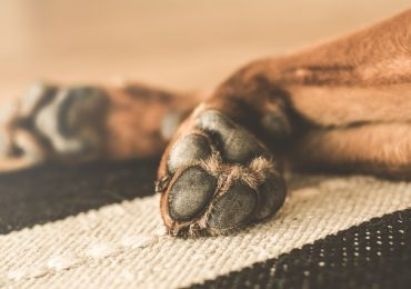 How Do I Know If My Dog Is Dying?