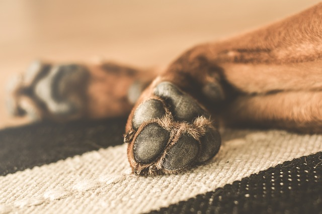 how do i know if my dog is dying