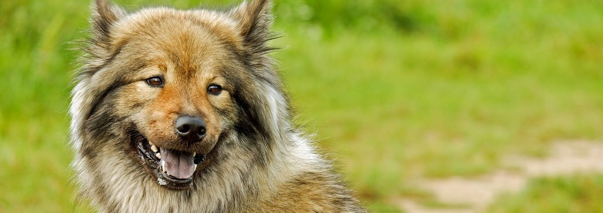 Dog Products Guide